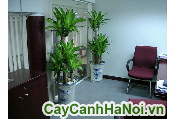Những loại cây văn phòng không cần chăm sóc vẫn