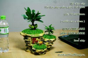Cây tài lộc-loài cây tượng trưng cho sự sung túc