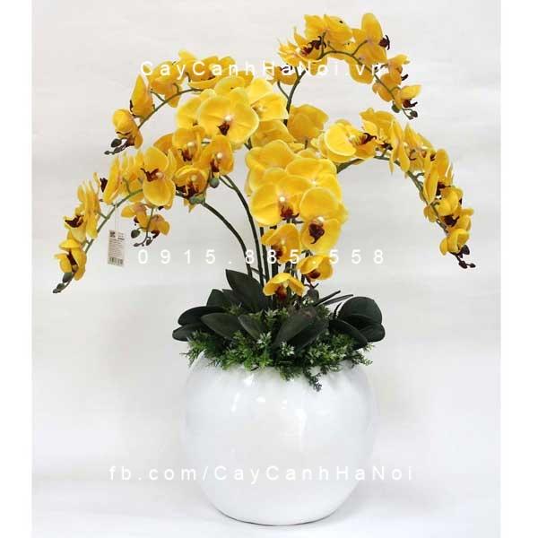 hoa lan hồ điệp-loài hoa dự báo tương lai